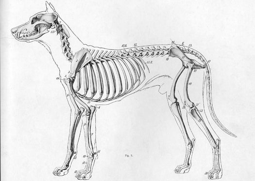 New Research Sheds Light On How Dogs Became Dogs