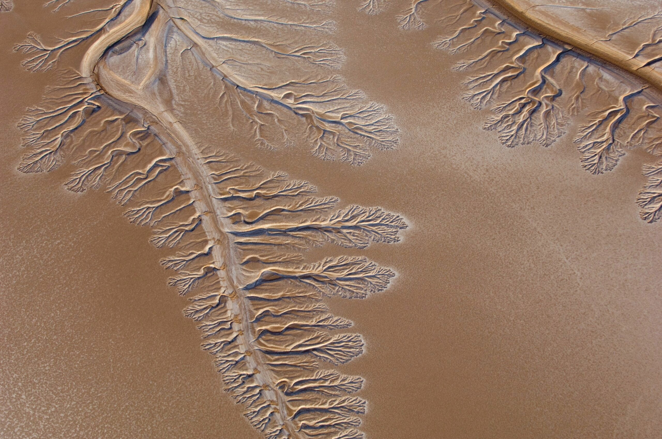 Colorado River Delta To Get Colorado River Water For First Time In Years