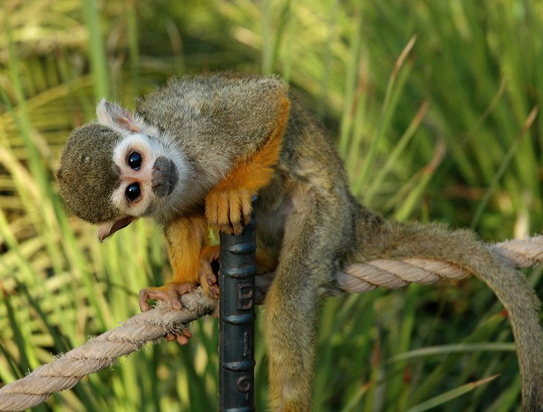 FYI: Why Are There No Native Monkeys In North America?