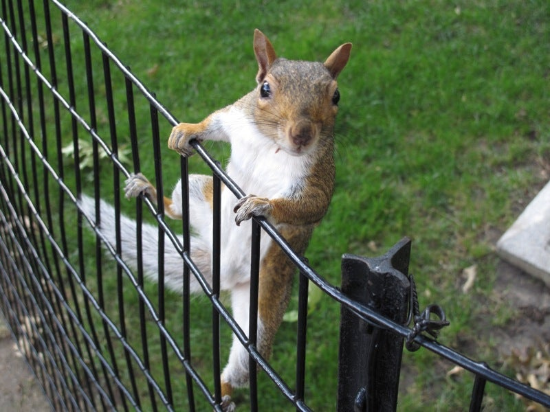 a squirrel climbing a wire fence