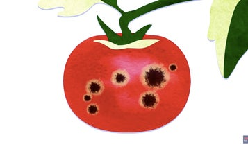 Can You Eat Spotty Fruits and Vegetables?