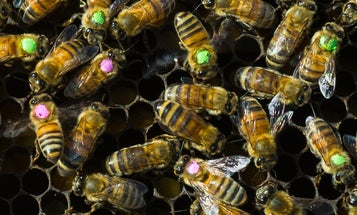 Antibiotic overuse might be bad for bees