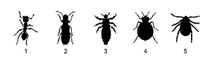bug lineup