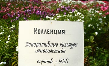 Russian Seed Bank, Saved During WWII, Fights to Save Land From Developers