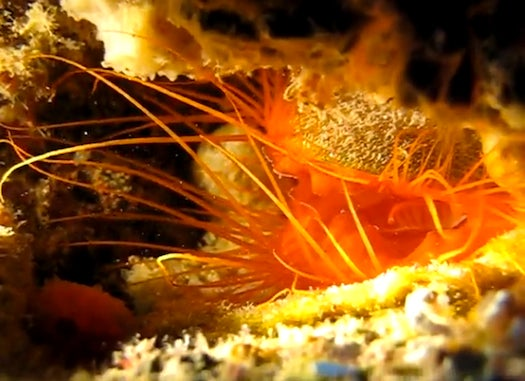 The Disco Clam Has A Built-In Strobe Light