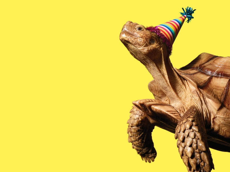 tortoise with a birthday hat on