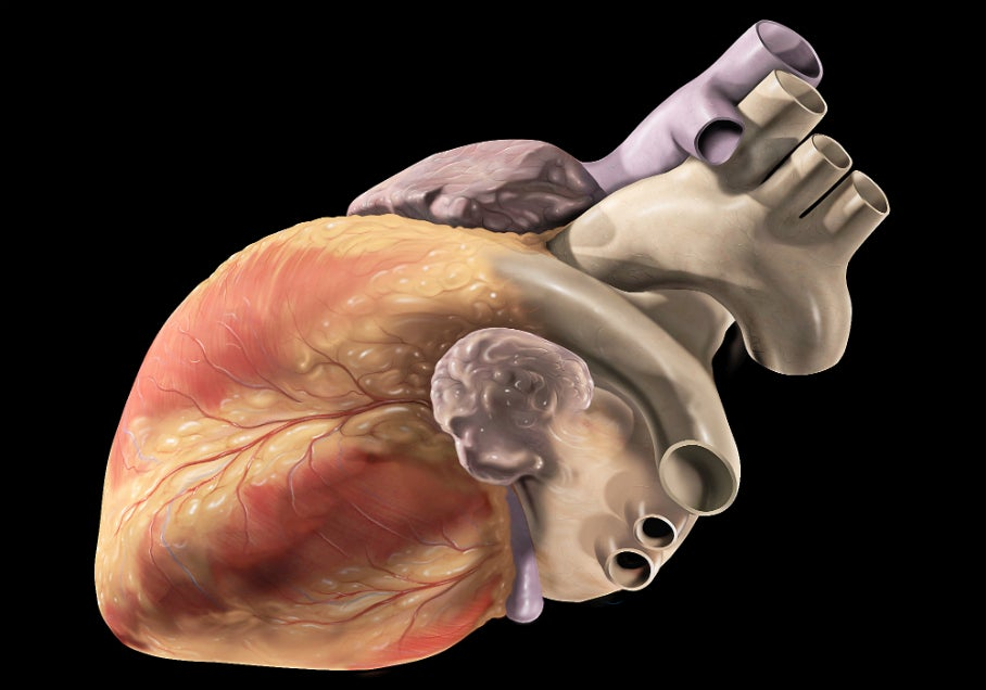 Watch Lab-Grown Heart Tissue Beat On Its Own [Video]