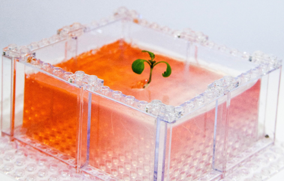 A Cool New Use For Legos: Growing Lab Plants