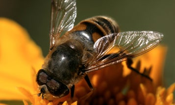 Saving Bees with Metagenomics