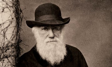 What If Darwin Had Never Existed?