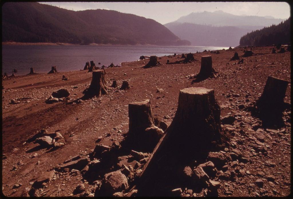 clear cut trees detroit lake dam