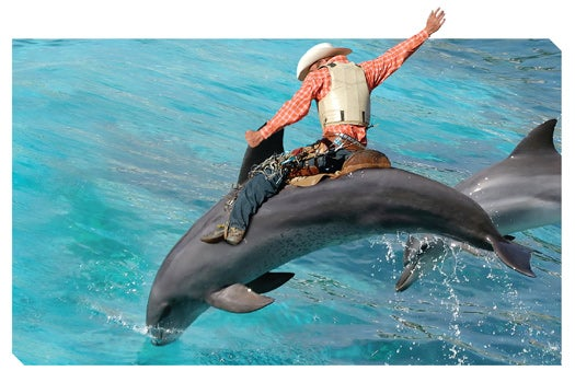 FYI: What Do Dolphins and Rodeo Bulls Have in Common?