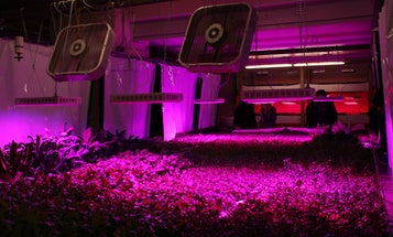 Building a Vertical Farm in an Old Chicago Meatpacking Plant