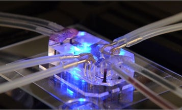 This Microchip Heart Has A Rare Genetic Disease