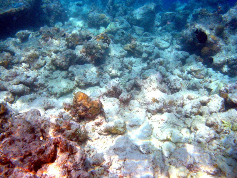 Eco Alert: Sunscreen Causes Coral Damage