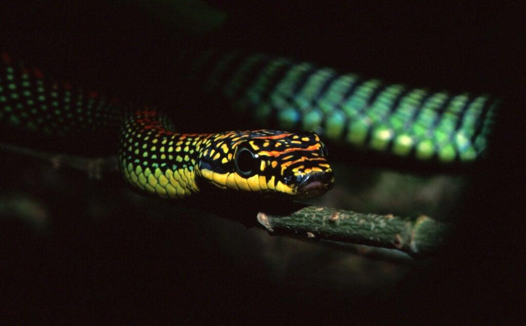 """""""Snake"""