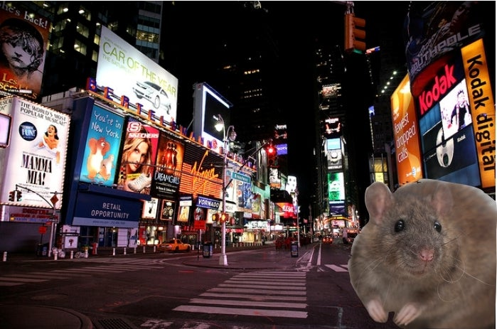 Like Bats in West Africa, Do Rats in the Big Apple Pose a Hidden Zoonotic Threat?