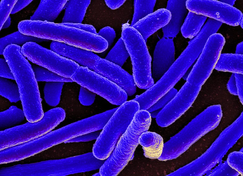 A warmer planet might make deadly bacteria more resistant to antibiotics