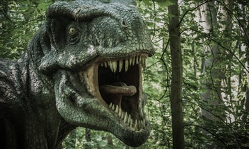 Why it would have been impossible for a T. rex to stick out its tongue