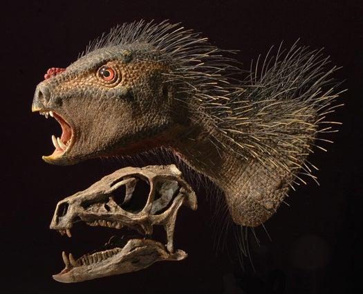 New Dinosaur Identified