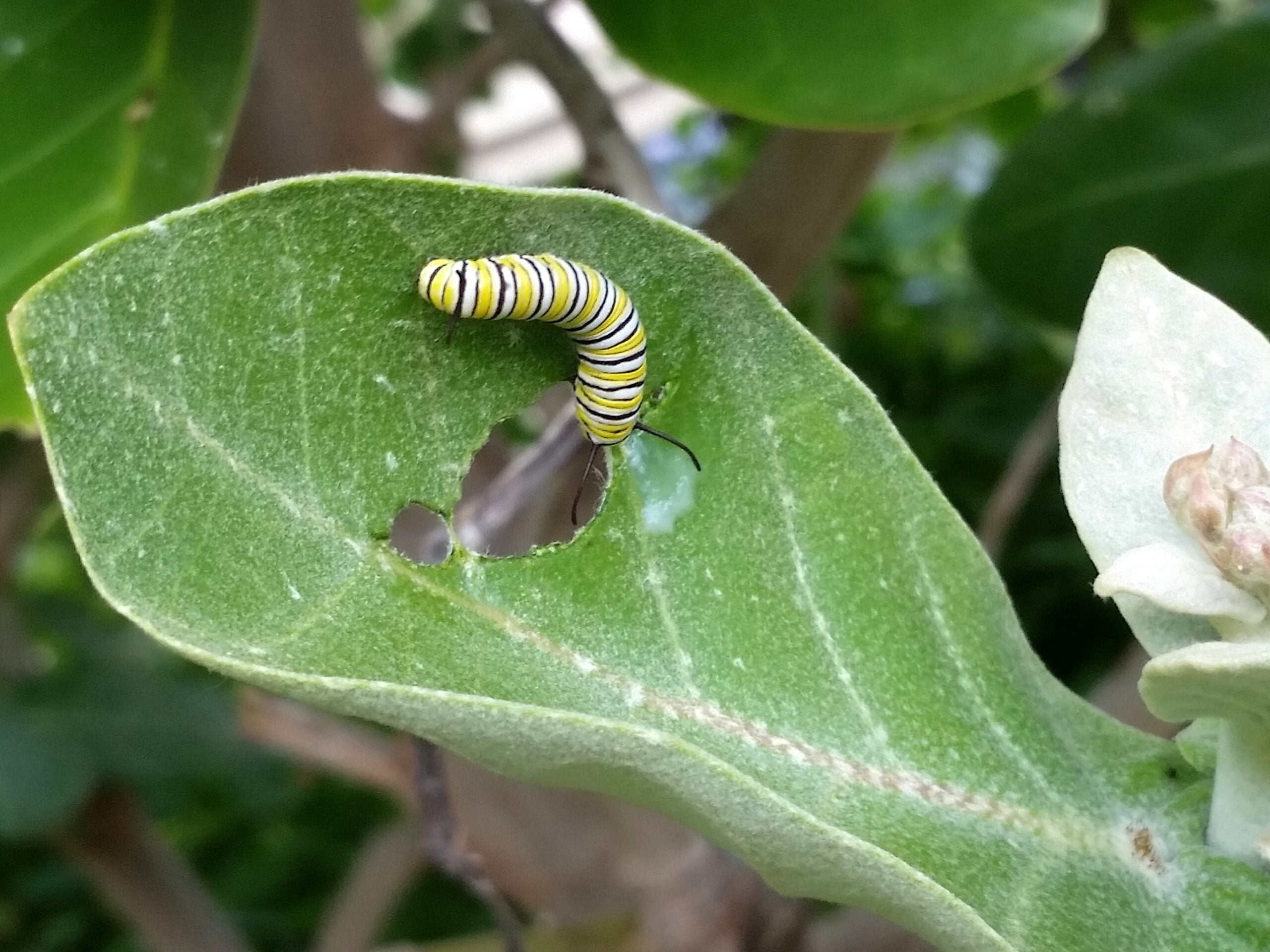 Plants Can Hear Pests And Take Defensive Maneuvers