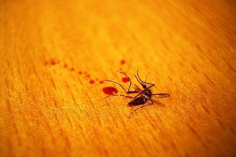Mosquito News