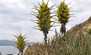 England, Meet Your New Giant Sheep-Eating Plant