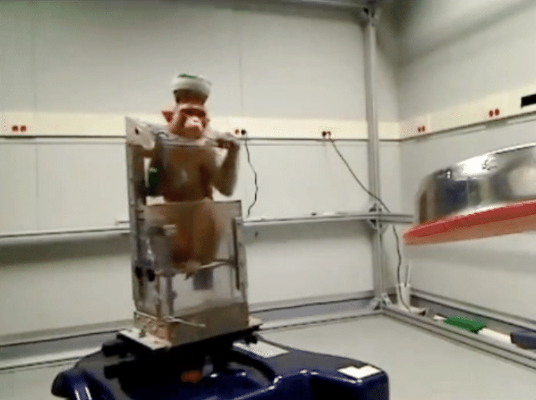 Monkeys Drive Wheelchairs Using Thought Alone