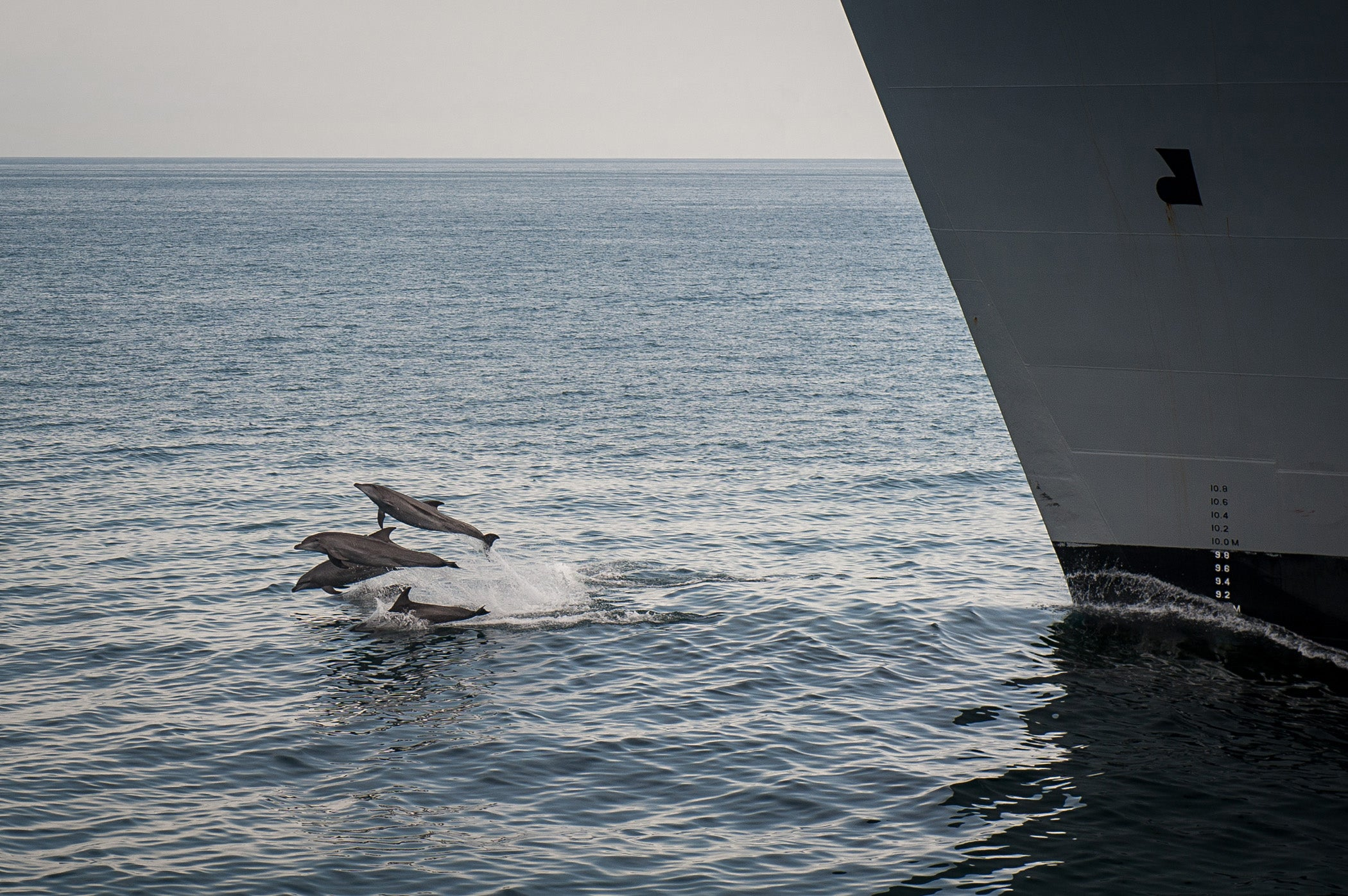 Navy Agrees To Limit Sonar Testing In California And Hawaii To Protect The Whales