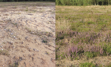 Soil Microbe Transplants Could Help Restore Damaged Ecosystems