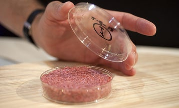 The First Lab-Grown Hamburger Is Served