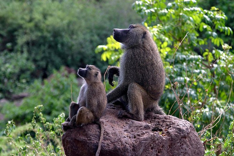 Can Mammal Mothers Choose The Sex Of Their Offspring?