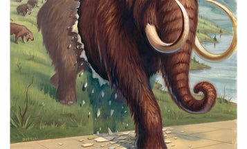 Long Live The Mammoth