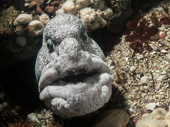 9 Stunning Photos Of Pacific Northwest Sealife
