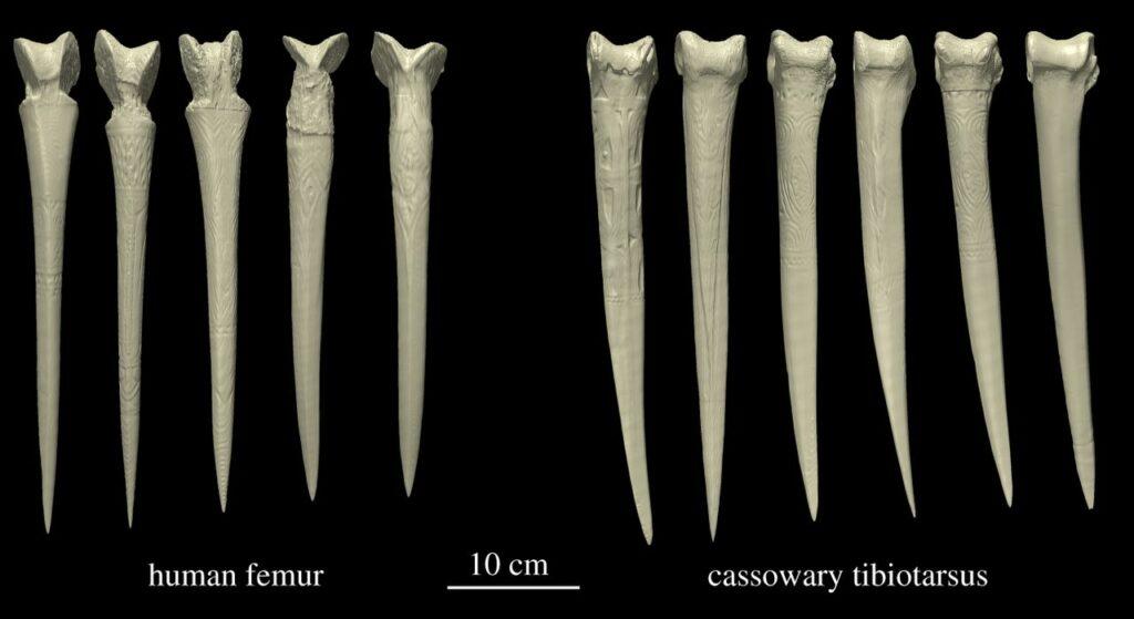 Bone daggers