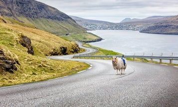 Sheep Equipped with 360-Degree Cameras Roam the Faroe Islands with a Purpose