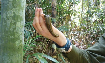 How Leeches Can Track Down The World's Rarest Animals