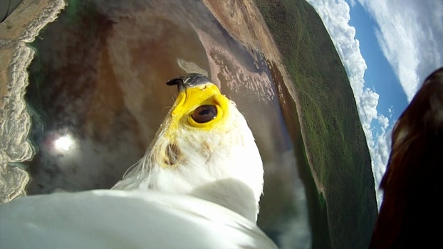 Amazing Avian Photos Captured By Strapping Cameras To Birds