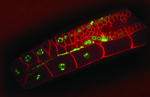 How Different Genes Work Together In a Worm