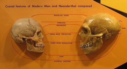 Their Big Eyes May Have Caused Neanderthals' Demise
