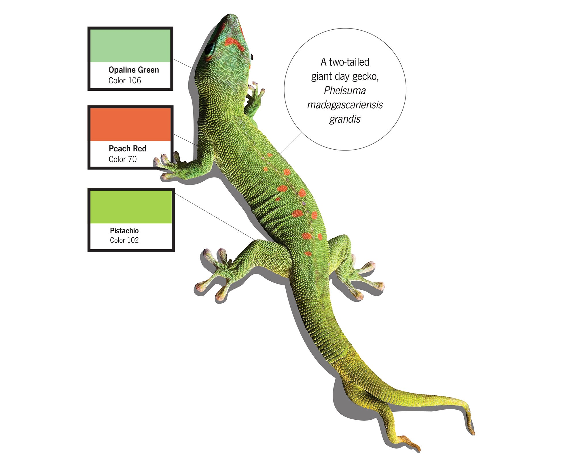 The Crazy-Specific Colors Biologists Use To Describe Animals