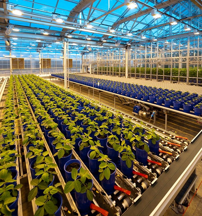 Soybeans in Automated Greenhouse