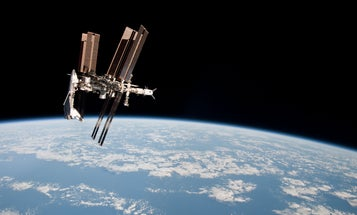 Next Year, Biologists Will Be Able To Track Animals In Real Time Using The ISS
