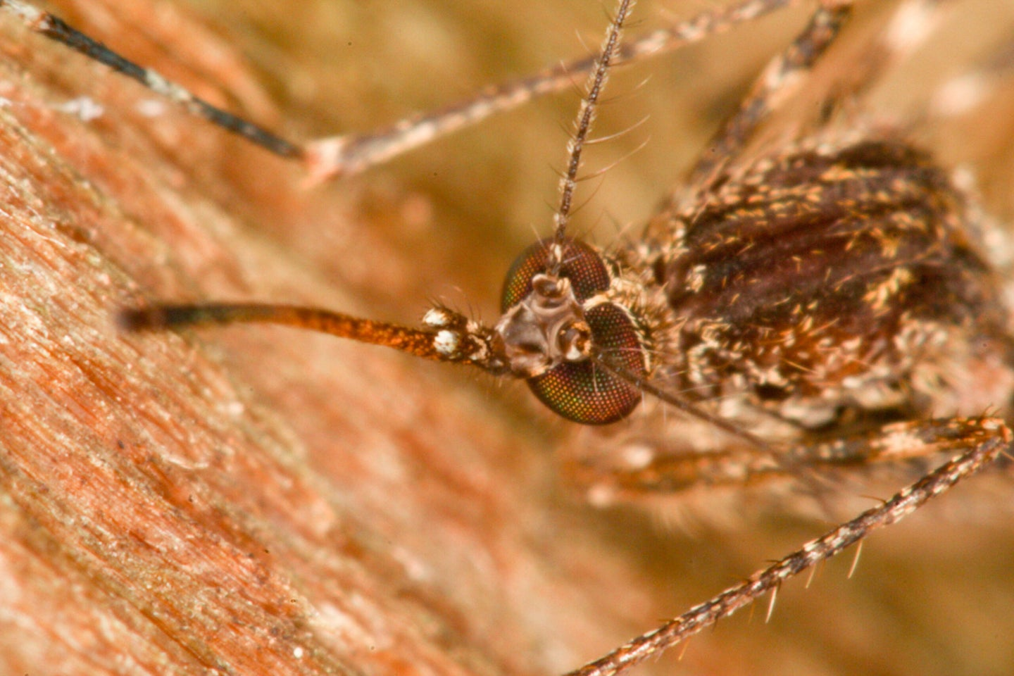 Droughts actually make West Nile virus worse
