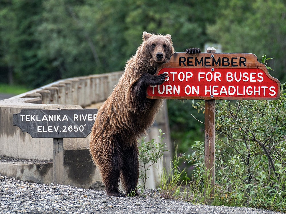 Bear next to street signs