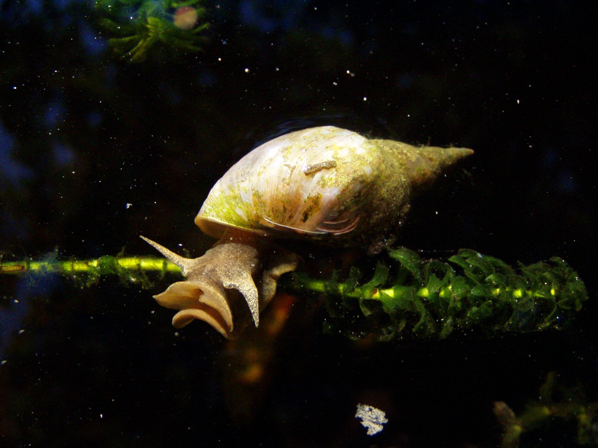 Scientists Force Snails To Exercise To See If It Affects Their Decision-Making Skills