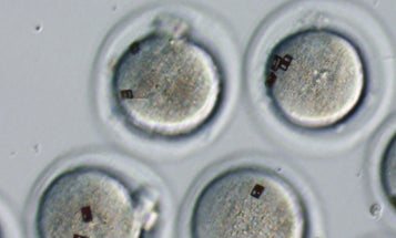 Researchers Tag Eggs and Embryos With Bar Codes, For Easy In-Vitro Fertilization