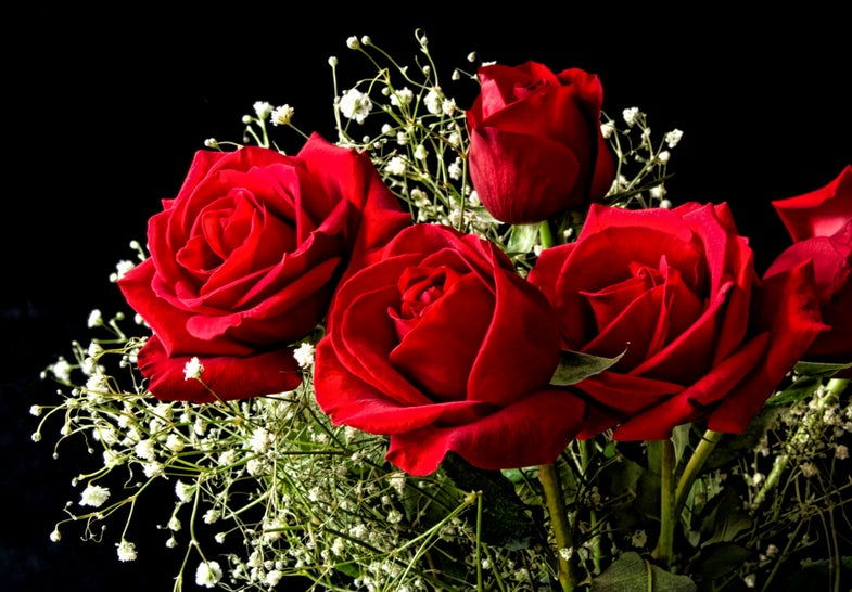Scientists Create Electronic Circuits In Living Roses