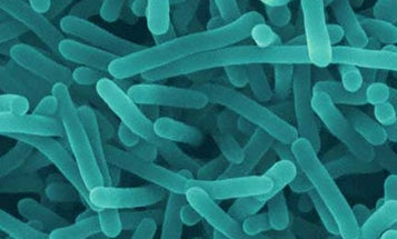 Bacteria to the Rescue