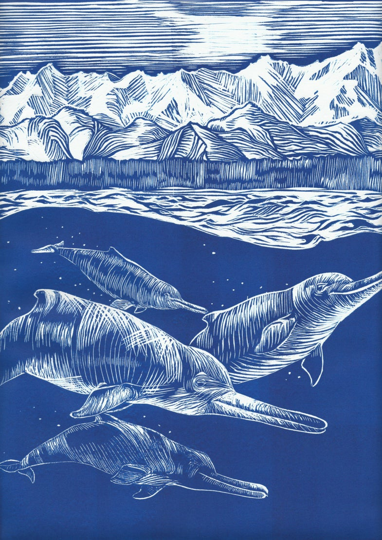 Arktocara yakataga ancient dolphins swimming in the Arctic
